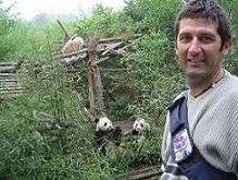 Osos Panda en Cheng Dou